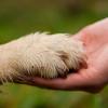 А вы знали что сегодня Всемирный день  бездомных животных?